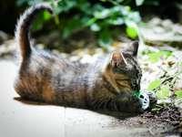 gattino soriano marrone che gioca palla bianca e verde - Il mio gatto bambino che gioca con una palla !.