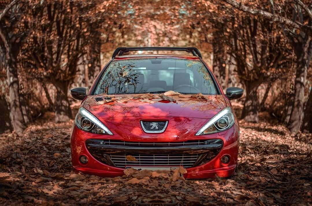 rött Peugeot-fordon under dagtid - Höst med bil?. Hamedan, Iran (10×7)