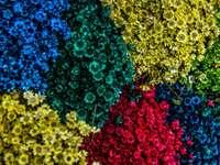 ripresa aerea di fiori che sbocciano in colori assortiti - Splendida aiuola colorata. Belo Horizonte, Brasile