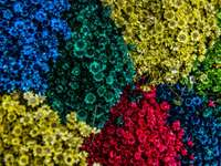 aerial shot of assorted-color blooming flowers - Stunning colorful flower bed. Belo Horizonte, Brasil