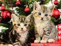 gatinhos debaixo da árvore de natal - m ......................