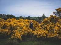osoba stojąca na środku żółtych pól kwiatowych - Strensall, Wielka Brytania