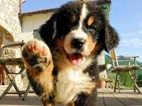 Cane da facebook :) - Questo è un cane nero di Facebook