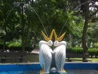 pelicani parc Călărași - doi pelicani prin parcul nostru