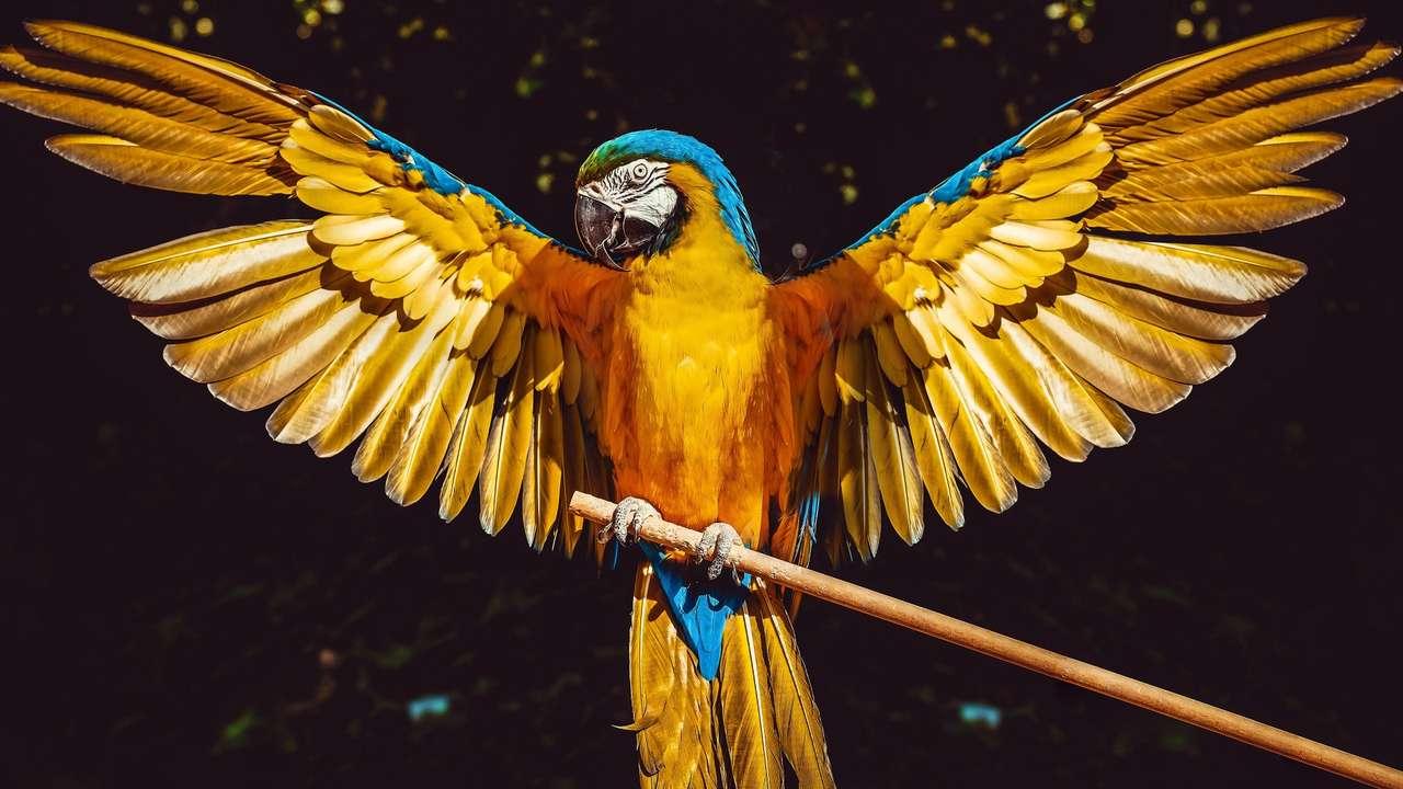 rietje - vogel die wil vliegen (12×7)