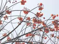zdjęcie pomarańczowych płatków kwiatów - Mueang Chiang Rai, Tajlandia