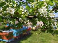 Pasieka na wiosnę - zdjęcie przedstawia pasiekę