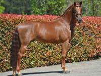 schlankes Pferd - m ........................