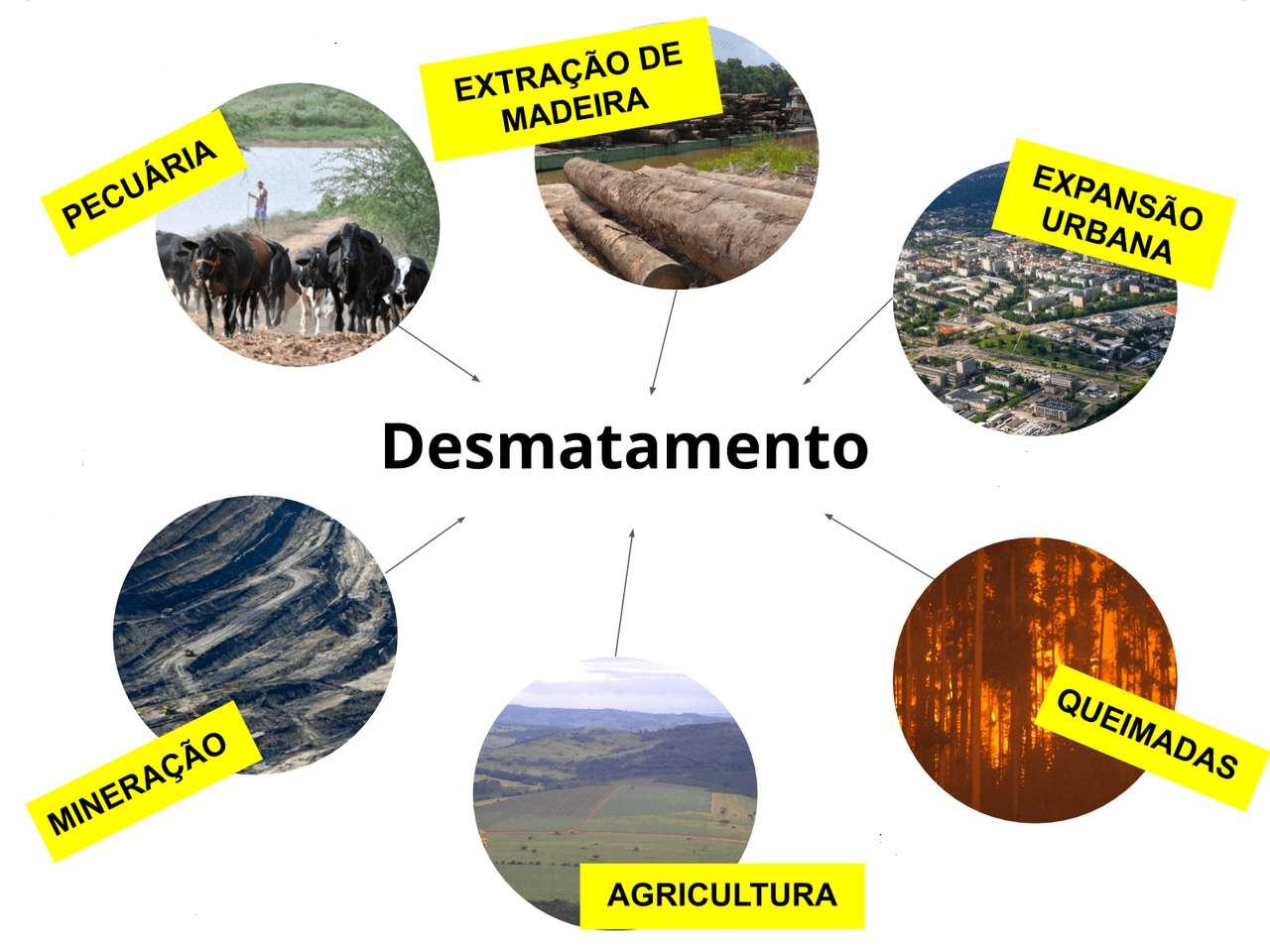 la déforestation - puzzle sur la déforestation (9×7)