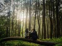 homem e mulher sentados em um tronco de árvore marrom - Amor na floresta. Bogor, Indonésia