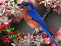 ένα πουλί σε ένα κλαδί κερασιάς