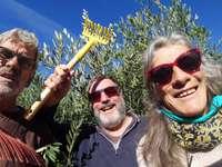 Olivplockare - de 3 ser glada ut!