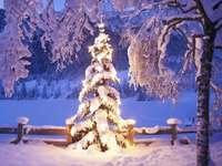 Hó és megvilágított karácsonyfa - Hó és megvilágított karácsonyfa