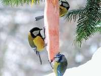 Segítünk a madaraknak - Rendezze a rejtvényt. Megtudhatja, hogyan segíthet a madaraknak télen