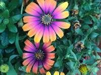 Flores pequeñas - ¡COMPLETA ESTE ROMPECABEZAS EN EL TIEMPO MENOS PISIBLE!