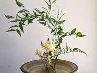 flores de pétalos blancos - Ikebana. 170 St Johns Rd, Glebe NSW 2037, Australia, Glebe