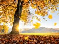 amanhecer de outono