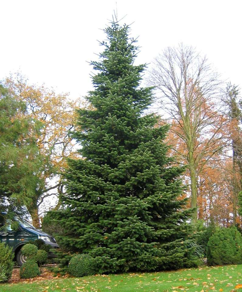 A feldíszített karácsonyfa