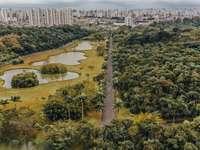 Flygfoto över träd och byggnader under dagtid