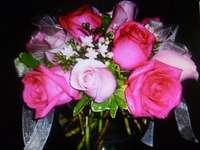 gyönyörű rózsák