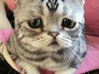 sad kitten