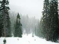 гора през зимата
