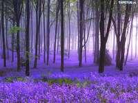 vřesový les
