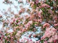 розови листни цветя