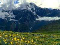 campo de flores amarelas perto da montanha durante o dia