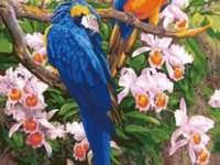 Два папагала
