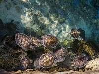 tartarugas em corpo de água