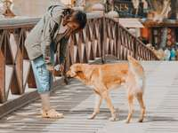 vrouw buigend naast langharige bruine hond