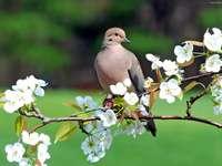 holub na větvi