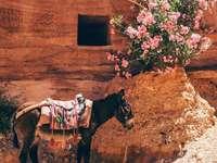 černý osel poblíž růžových květů