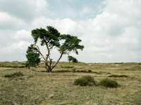 Arbre vert sur champ d'herbe brune sous les nuages blancs
