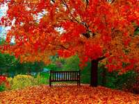 Puzzle di stagioni autunnali