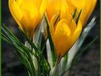 zázrak jara
