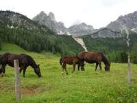 chevaux au pâturage