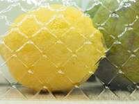 žluté citronové ovoce na černém kovovém rámu