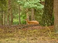 veado marrom em folhas secas marrons no solo durante o dia