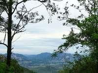 fotó zöld fák és a hegy