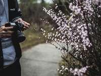 persoană care deține aparatul foto negru lângă flori albe