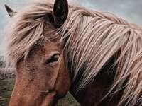 caballo marrón mirando hacia los lados