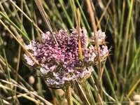 paarse bloemen overdag