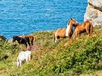 Диви коне в Испания