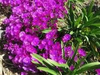 Ledové květiny ve Španělsku