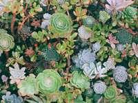 заснемане в горния ъгъл на сукулентни растения