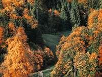 oranje-en-groen gebladerde boom in bos