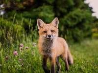 braunes Tier auf grünem Gras