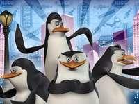 La notte dei pinguini a New York